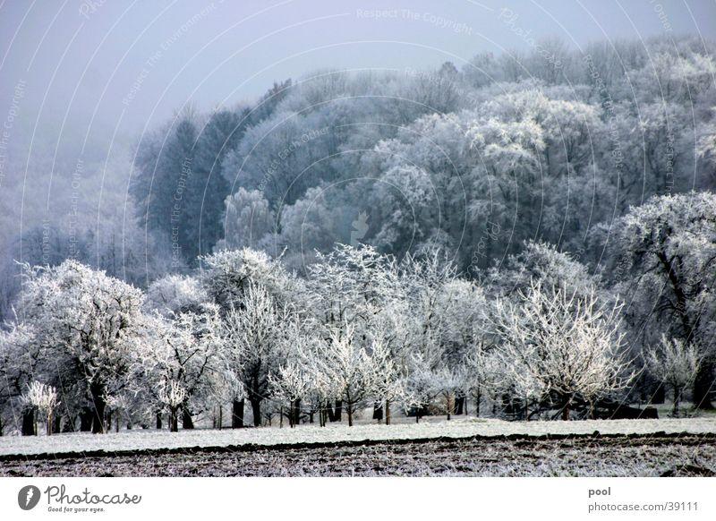 Winterlandschaft Raureif weiß Baum Wiese Wald kalt Obstbaum Nebel Berge u. Gebirge Schnee Eis Farbe trist Sonne