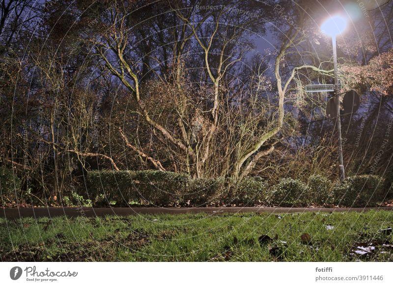 Verzweigter Baum im romantischen Laternenschein Vegetation Flora und Fauna Wege & Pfade Nacht nocturn Nachtaufnahme Gras ruhig Menschenleer Pflanze Natur