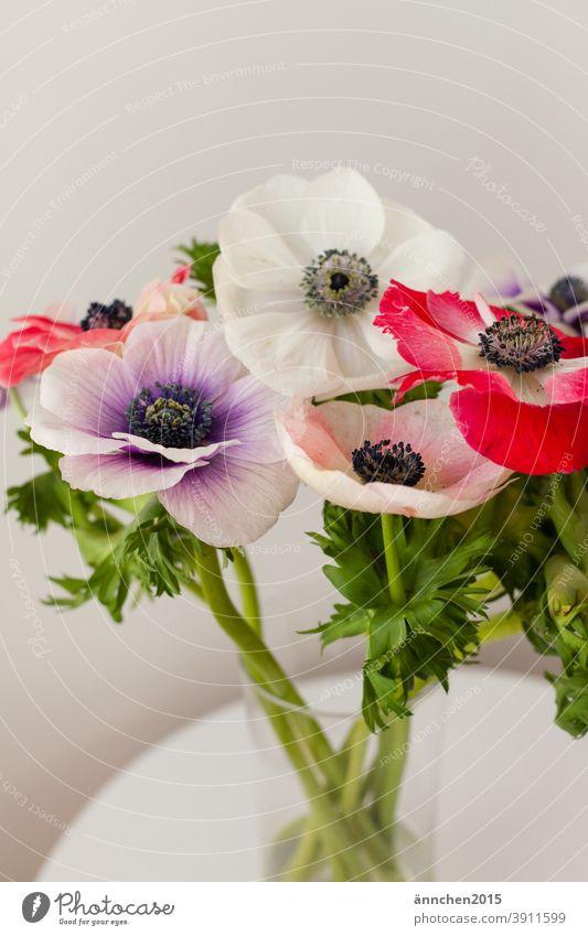 bunter Mohn in einer Glasvase die auf einem weißen Tisch steht Blumen Blüten Natur grün Garten Frühling Sommer schön Blühend Menschenleer Farbfoto natürlich