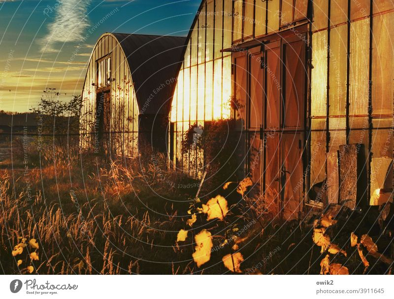 Blechdosen Lagerhalle Architektur Menschenleer Außenaufnahme Bauwerk Totale Halle Beton Metall Glas alt Farbfoto Sträucher Wolken Gebäude Himmel