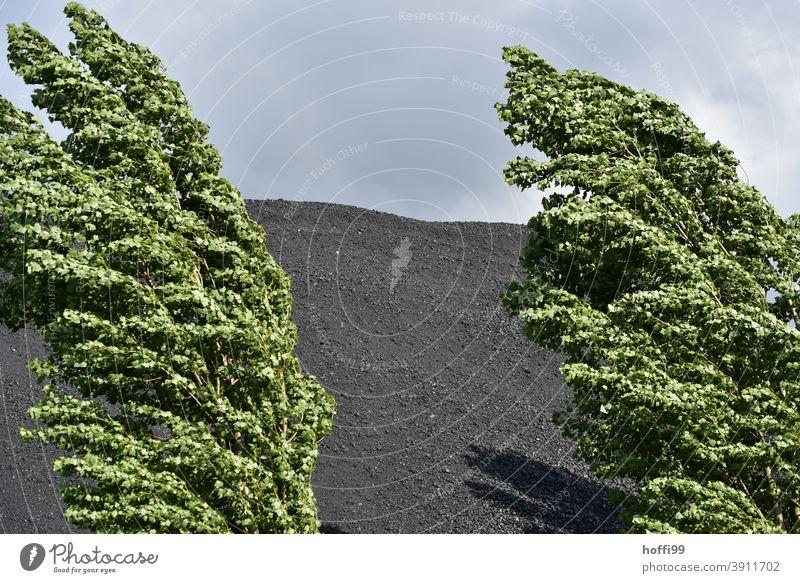 wehende Pappeln vor einer  Kohlenhalde wehende Äste windiges Wetter kohlenhaufen Halde stürmische zeiten Klimawandel Umwelt Kohlendioxid Wolken Emission