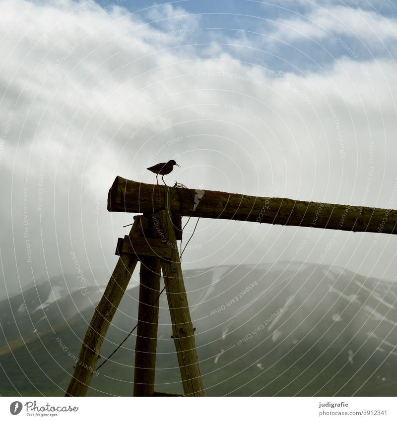 Rotschenkel in isländischer Landschaft Vogel klein Tier Natur Umwelt Island Holzgestell Berge u. Gebirge Himmel Wolken Außenaufnahme natürlich Klima Stimmung