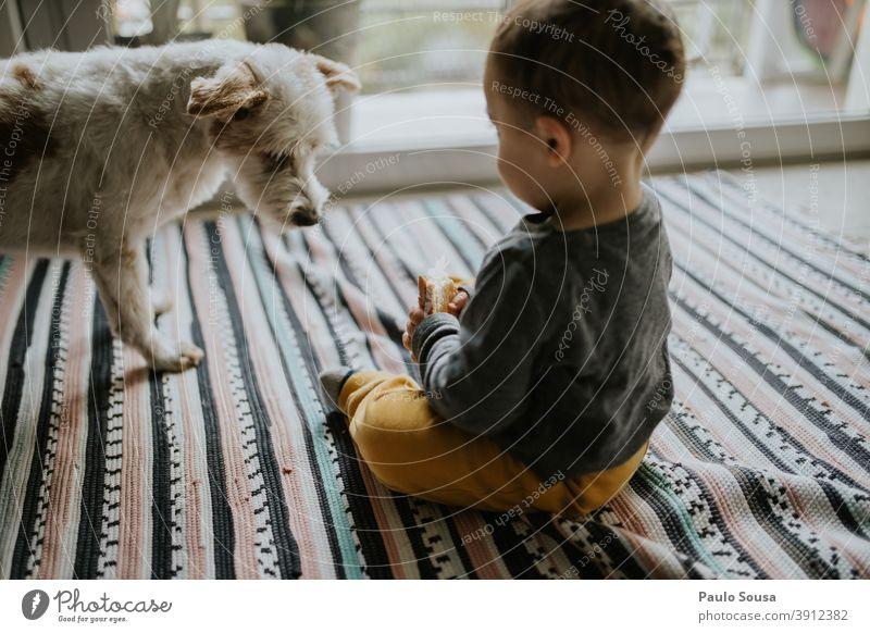 Kind spielt zu Hause mit Hund Kindheit Zusammensein Haustier authentisch Liebe Spielen Lifestyle niedlich Tier Freundschaft Farbfoto Tierliebe Tierporträt