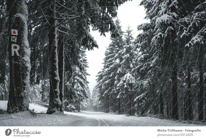 Winterwald am Rennsteig, Thüringer Wald Thüringen Schneekopf Bäume verschneit Frost kalt Weg Loipe Skifahren Langlauf Urlaub Touristen Tourismus reisen Erholung