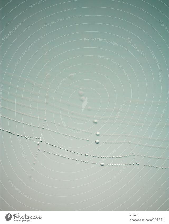 Perlen der Natur Spinnennetz Tau Tropfen Netz Wasser ästhetisch schön Reinheit elegant rein Farbfoto Gedeckte Farben Außenaufnahme Nahaufnahme Detailaufnahme