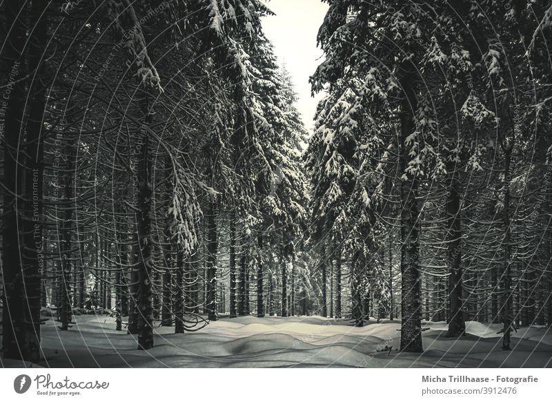 Winterwald Wald Schnee verschneit Bäume Frost kalt Thüringen Rennsteig Thüringer Wald Schneekopf Jahreszeit Tourismus Touristen Urlaub Erholung reisen