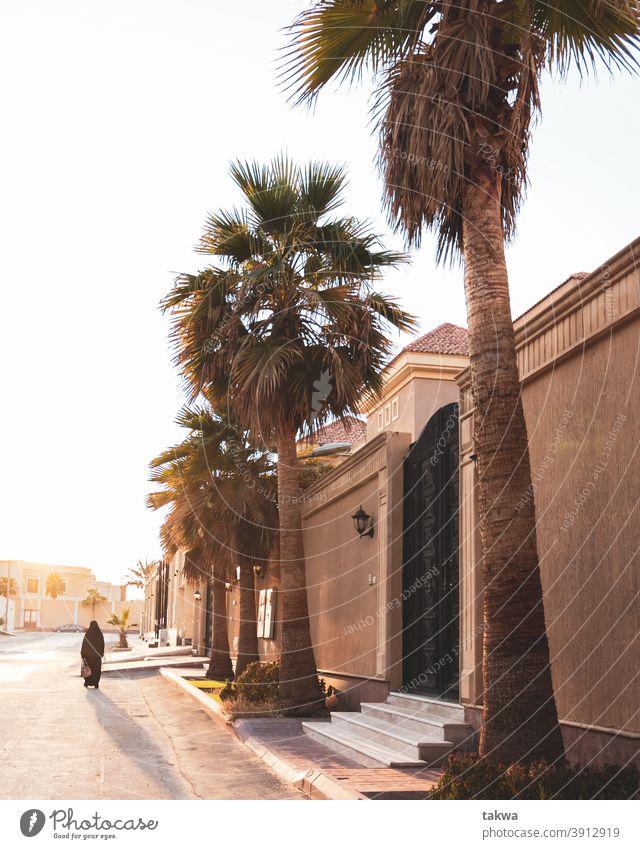 Straßenfotografie in KSA ksa Leben riyadg Natur Abenteuer Saudi-Arabien Tourismus wüst Reise Urlaub Naher und Mittlerer Osten Düne Ferien & Urlaub & Reisen Sand