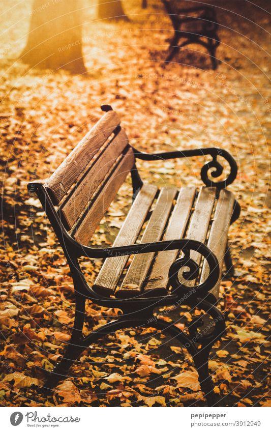 Sitzbank in einem Park im Herbst Bank Menschenleer Außenaufnahme Farbfoto Baum Blatt ruhig Herbstlaub Sonne Blätter herbstlich Herbstfärbung Herbstbeginn