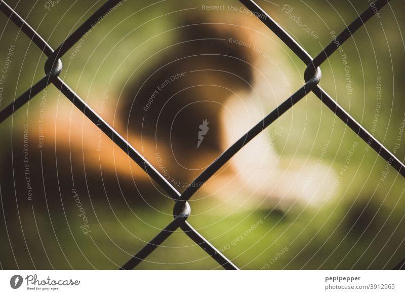 Löwe hinter einem Zaun gefangen Tier Wildtier Farbfoto Tierporträt Außenaufnahme Katze Zoo Menschenleer wild Tierpark Raubkatze Kopf Tiergesicht unscharf
