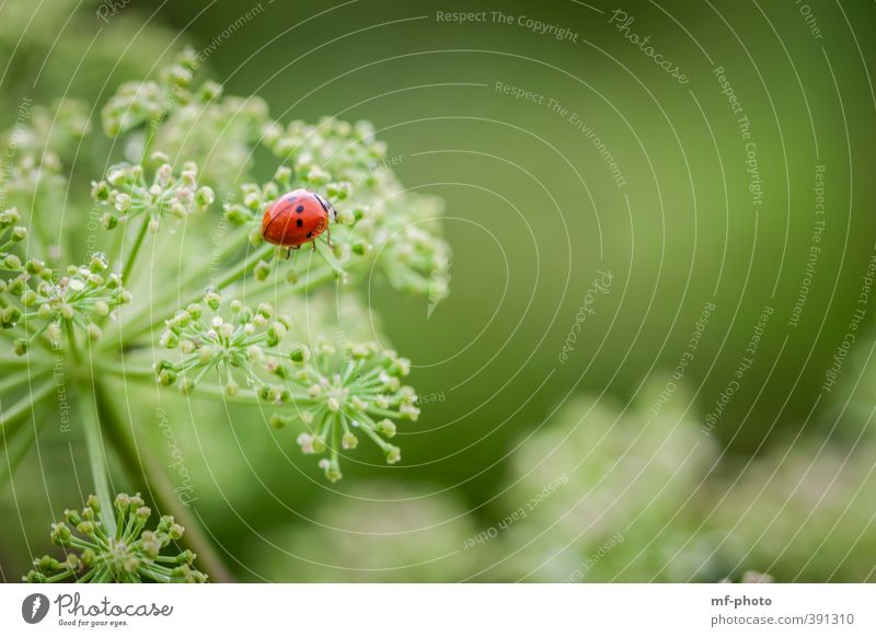 Kletterer Umwelt Sommer Tier Käfer 1 grün rot Farbfoto Menschenleer
