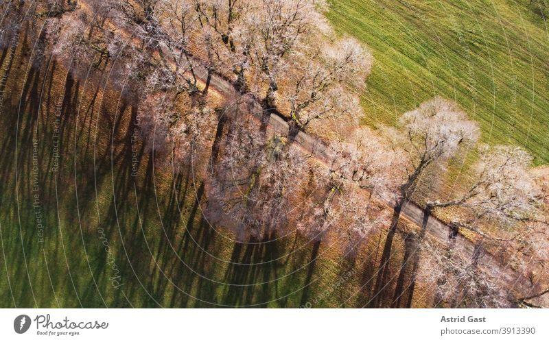 Luftaufnahme einer Allee in Deutschland im Dezember mit einer Drohne luftaufnahme landschaft allee weg kurfüstenallee marktoberdorf deutschland bayern allgäu