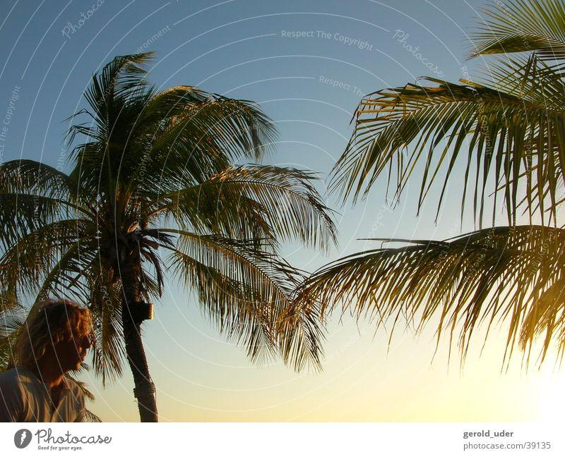 Palmen und Mann Wind Sturm Kuba