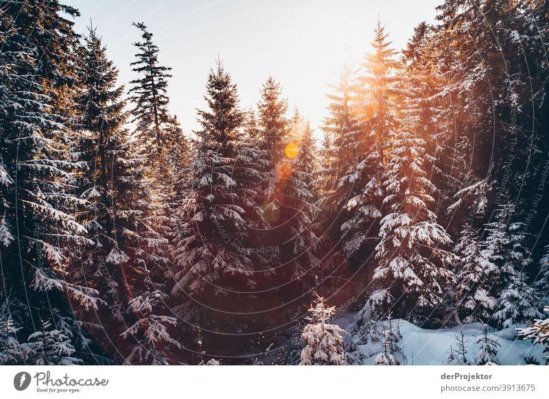 Schneebedeckte Nadelbäume im Gegenlicht mit Sonne im Harz Joerg Farys Nationalpark Naturschutz Niedersachsen Winter harz naturerlebnis naturschutzgebiet