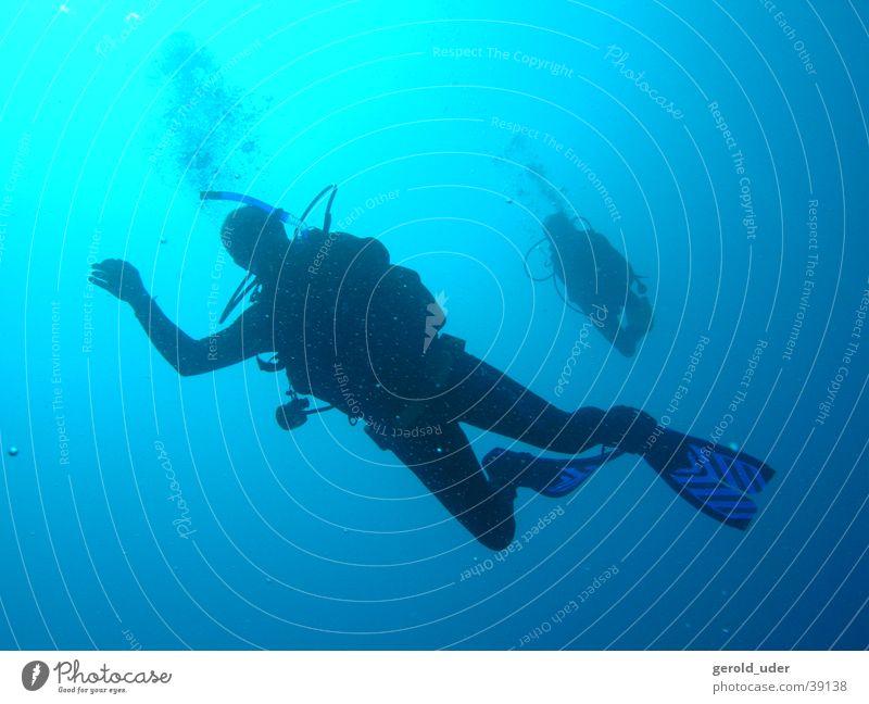 Freier Fall tauchen Sport Wasser Unterwasseraufnahme Kuba Hilma Hooker