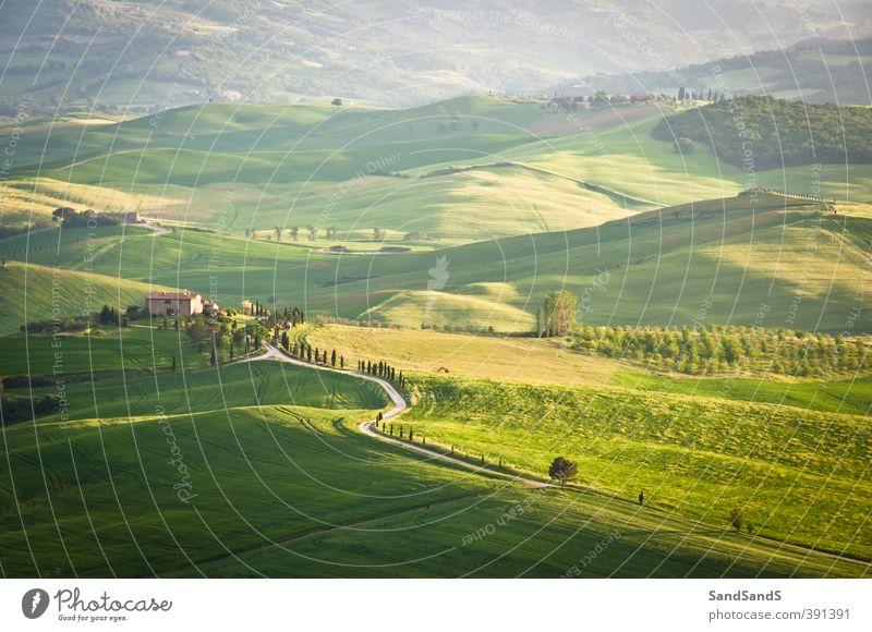 Grüne toskanische Hügel schön Ferien & Urlaub & Reisen Tourismus Sommer Haus Natur Landschaft Gras grün Idylle Europa Italien Italienisch Toskana Ackerbau