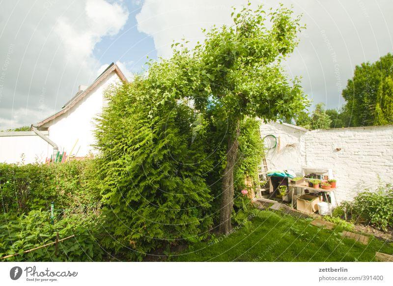 Apfelbaum Himmel Natur schön Sommer Baum Freude Haus Umwelt Mauer Garten Wohnung Idylle Klima Lifestyle Häusliches Leben Schönes Wetter
