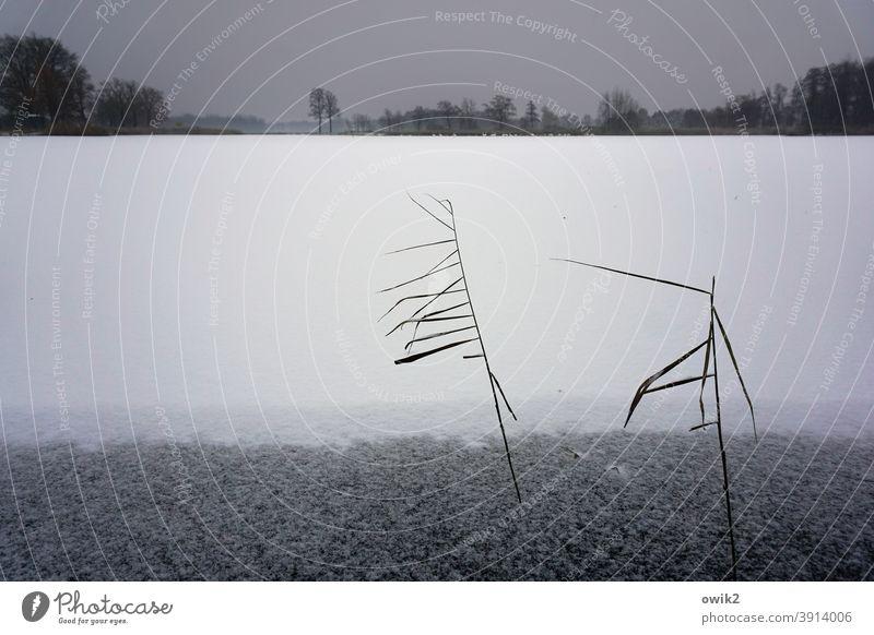 Striche im Weiß Winter Außenaufnahme geheimnisvoll gefroren Schnee Eis dünn Pflanze Textfreiraum oben bizarr Landschaft Natur Sträucher Umwelt kalt Frost weiß