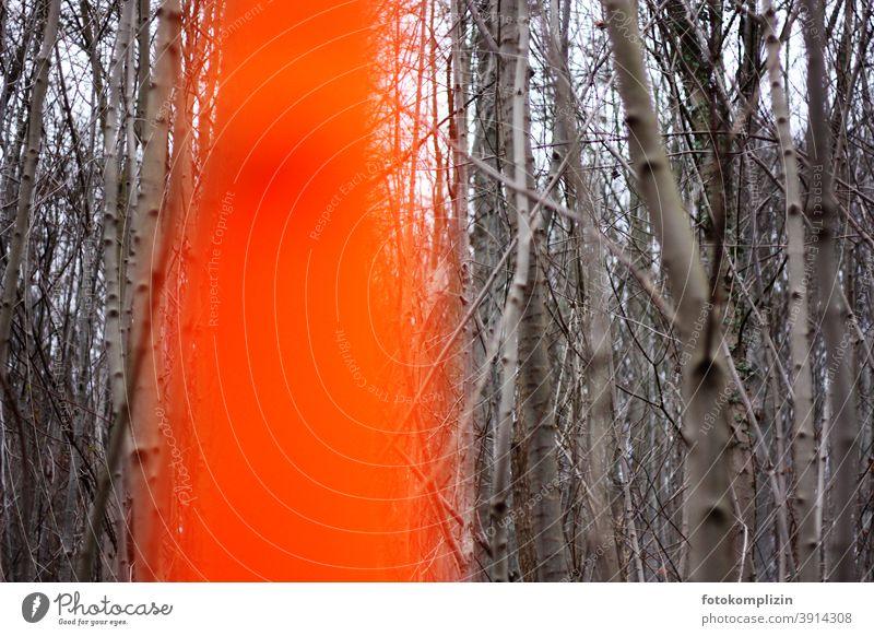 im Vordergrund unscharfer orange markierter Stamm im grauen kahlen Forstwald Natur Baum leuchtend orange Neonfarben Buchenwald forstamt Bäume Forstwirtschaft