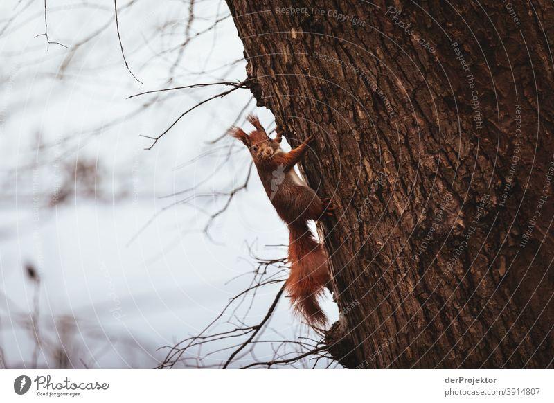 Eichhörnchen am Schlachtensee im Winter II Naturerlebnis Ferien & Urlaub & Reisen Lebensfreude Landschaft Tourismus Licht Kontrast Schatten Sonnenstrahlen