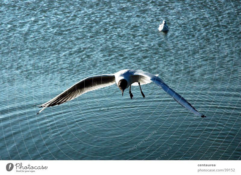 Möwe #2 Meer Nordsee Segeln schreien füttern