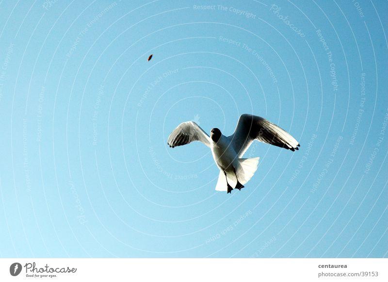 Möwe #1 Meer Vogel Nordsee schreien füttern