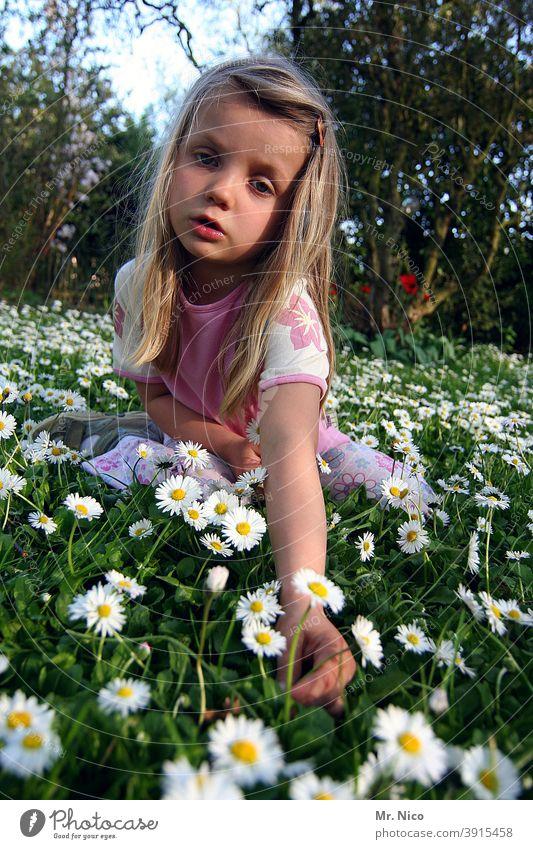 Ich pflück mir ein Gänseblümchen Wiese Garten grün Gras Natur Sommer Blume Frühling Pflanze weiß gelb Blühend Blumenwiese Frühlingsgefühle langhaarig blond