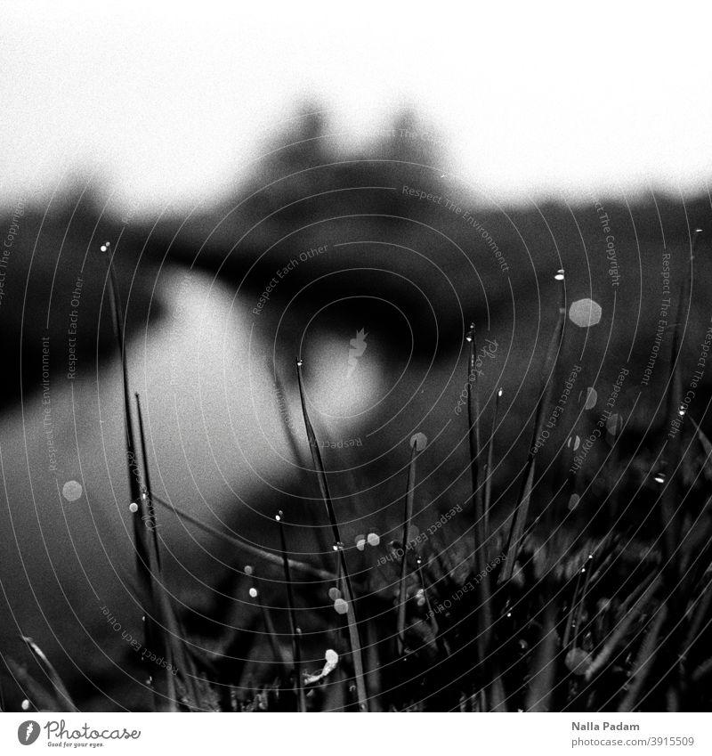 Wassertropfen auf Gräsern analog Analogfoto Schwarzweißfoto Gras Tropfen Kanal Unschärfe Morgentau feucht Außenaufnahme Natur nass Tau Schlagentiner Stremme