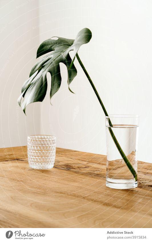 Grüne Pflanze in Vase auf Tisch Fensterblätter Wasser Glas sehr wenige Innenbereich Vorbau hölzern Stil natürlich einfach Design frisch Dekoration & Verzierung