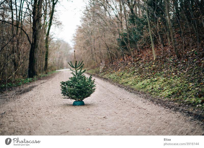 Tannenbaum auf Waldweg tannenbäume Nordmanntanne kaufen Weihnachtsbaumverkauf Tannenbäume Tradition grün Nadelbaum Bäume Natur Weihnachten draußen einsam
