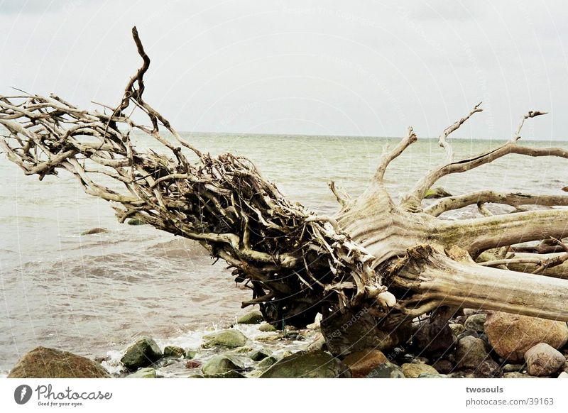 Wurzel Natur Wasser Baum Strand Graffiti Wurzel