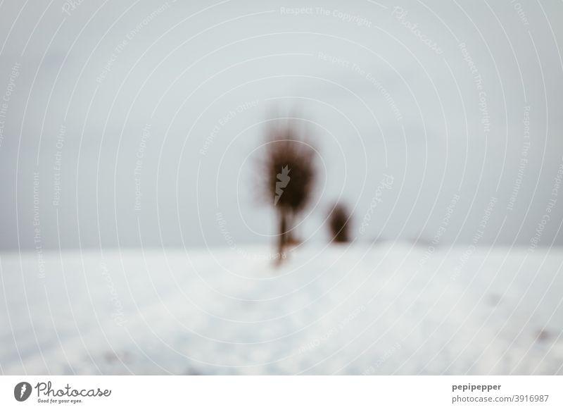 Winterlandschaft Schnee Baum kalt Eis Frost Raureif weiß Natur Himmel blau Außenaufnahme gefroren Kristallstrukturen Menschenleer frieren Schneebedeckt Feld