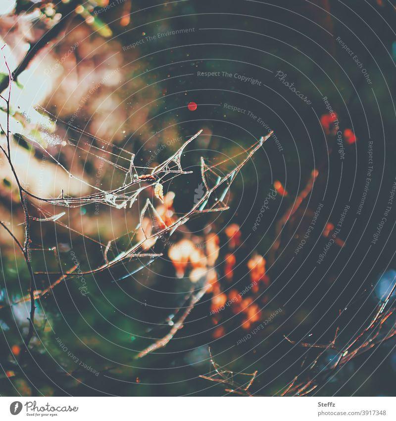 Spinnennetze im warmen Herbstlicht Herbstwald abstrakt asymmetrisch Asymmetrie Wald Netz Netzwerk Oktober November Lichteinfall Licht und Schatten Herbstfärbung