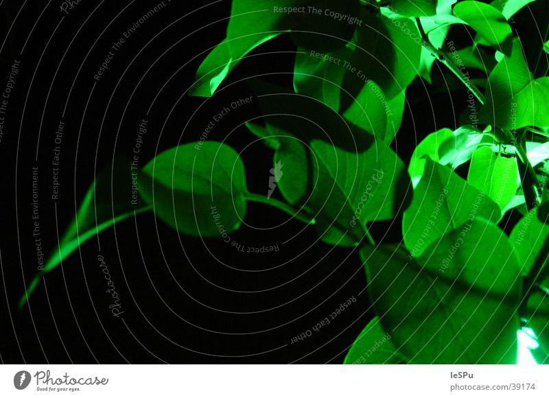 Blattwerk Baum grün Sommer Frühling neu Wachstum Ast Jahreszeiten Stillleben Reifezeit