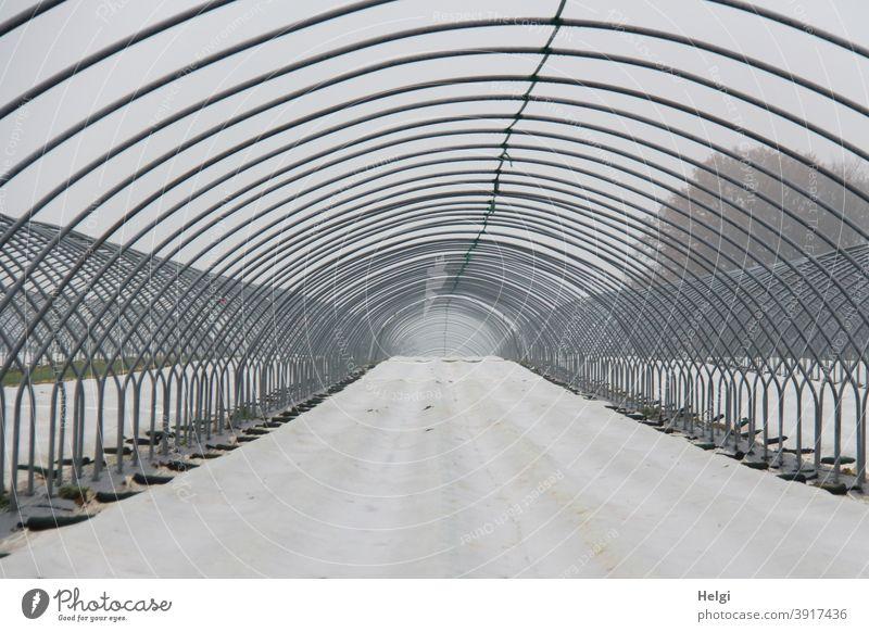 Metallgestänge als Vorbereitung für einen Folientunnel im Erdbeeranbau, der Boden ist mit weißer Folie bedeckt Metallstangen gebogen Tunnel Landwirtschaft