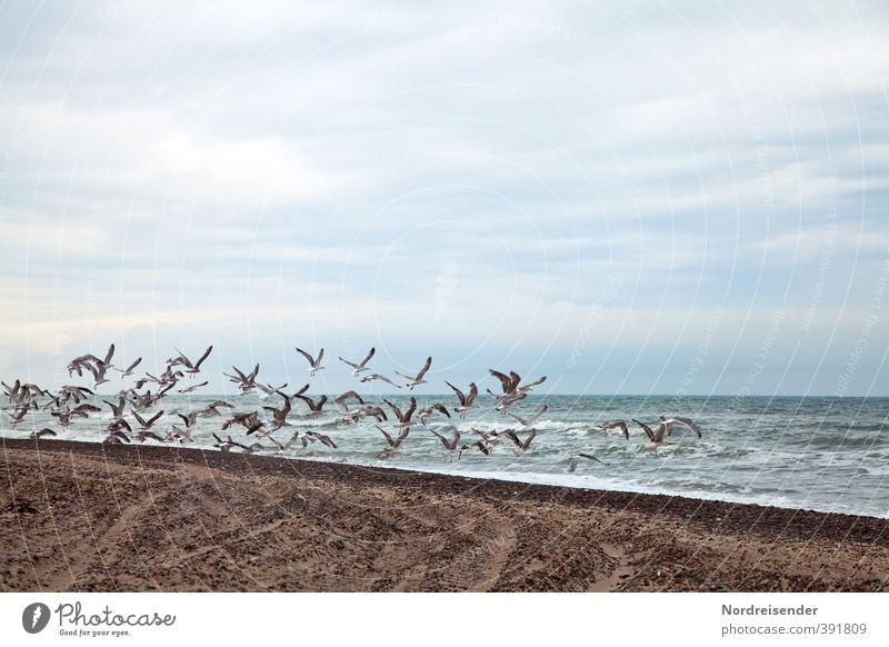 Schwarmverhalten Ferien & Urlaub & Reisen blau Wasser Sommer Meer Wolken Tier Strand Leben Küste Freiheit Sand braun Vogel fliegen Wellen
