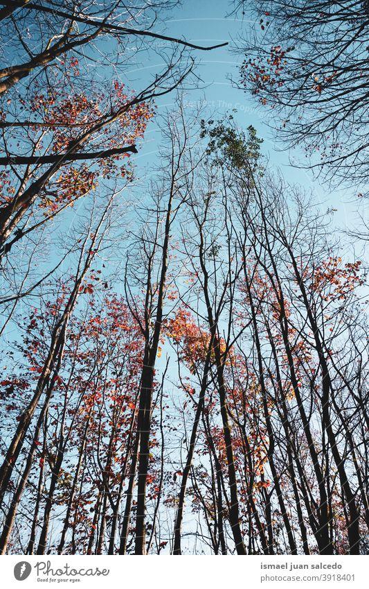 Baumzweige und blauer Himmel Niederlassungen Pflanze Blätter Blatt Natur Hintergrund Herbst fallen Saison rot braun braune Blätter Herbstlaub Herbstfarben Wald