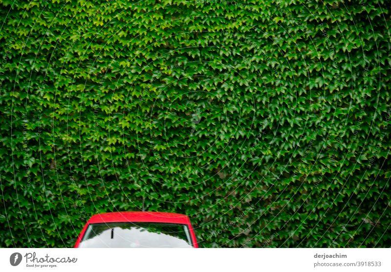 """Ein"""" Rotes """" Auto, ohne Seitenspiegel steht vor einer grünen Blätterwand.. Verkehr PKW Straße Auto-Skooter Farbfoto Fahrzeug Jahrmarkt Menschenleer"""