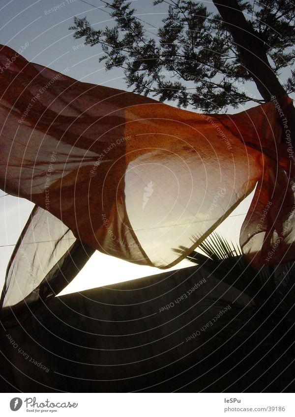 Saree Ferien & Urlaub & Reisen Bewegung Wind Bekleidung Dynamik Indien Wäsche Tuch Seide Naher und Mittlerer Osten