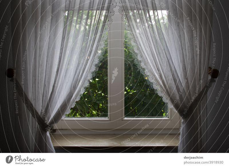Weiße hübsche Gardinen mit Schlaufenband   . Dekoration und Fenster Verzierung. Vor dem Fenster steht eine grüne Hecke . Stoff Licht Farbfoto Schatten Vorhang