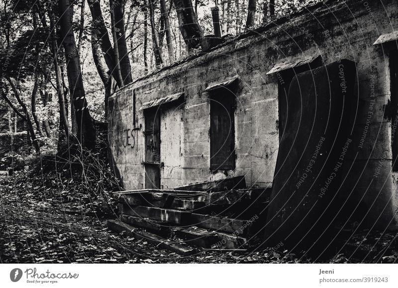 Alte eingewachsene Ruine mitten im Wald | Müll an der Hauswand | Tür und Fenster verschlossen und zugenagelt | lost place lost places verlassen dreckig