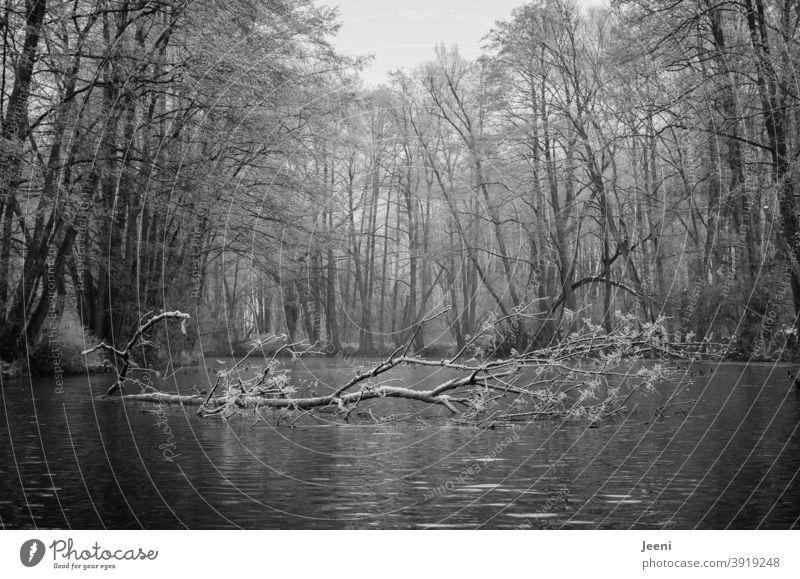 Kanufahren im Winter bei Frost  | Die winterliche Ruhe auf dem Fluss genießen | Der Baumstamm liegt ganz sanft im Wasser Flussufer Kanutour kalt Schnee Raureif