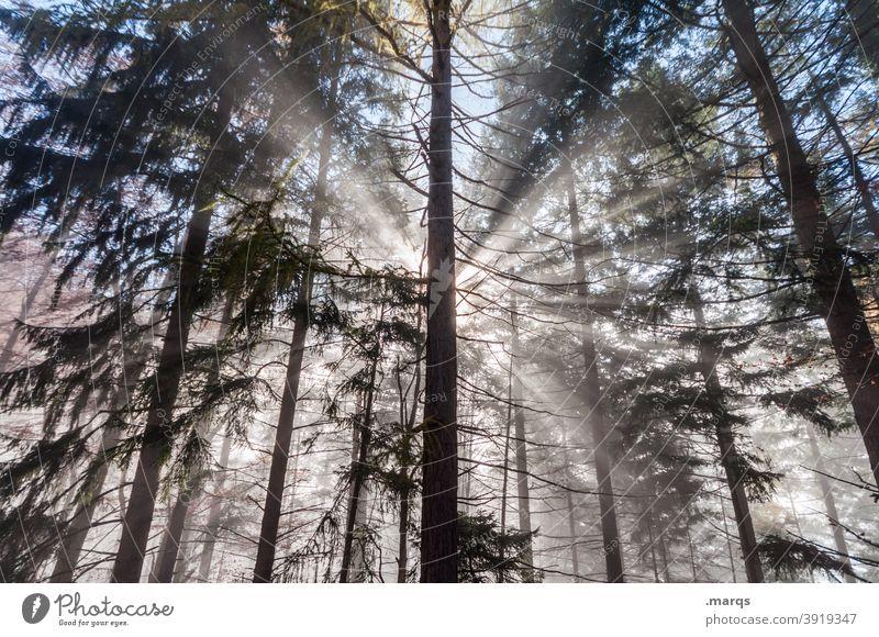Hoffnung Wald Nebel Sonnenstrahlen Religion & Glaube Natur Nadelbaum Sonnenlicht Lichtblick