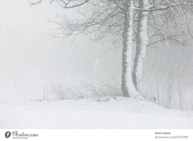 Wald in verschneiter Landschaft, Galicien, Spanien. Schnee Winter wild Schneesturm Meteorologie Wetter Winterlandschaft Berge u. Gebirge neblig