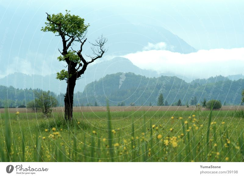 Murnauer Moos Baum Bayern Oberbayern Wiese ruhig harmonisch Landschaft Berge u. Gebirge Deutschland Idylle Nationalpark Sommer Außenaufnahme