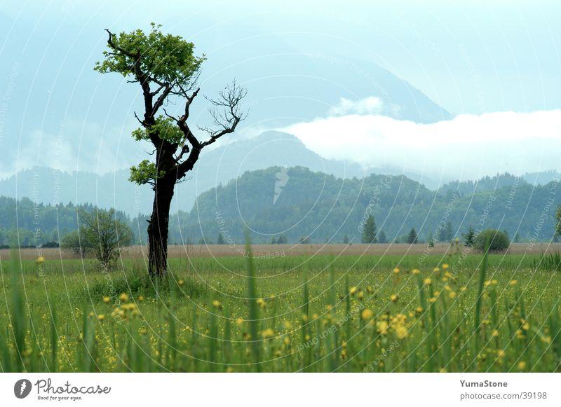 Murnauer Moos Baum ruhig Wiese Berge u. Gebirge Landschaft Deutschland Idylle Bayern harmonisch Nationalpark Oberbayern