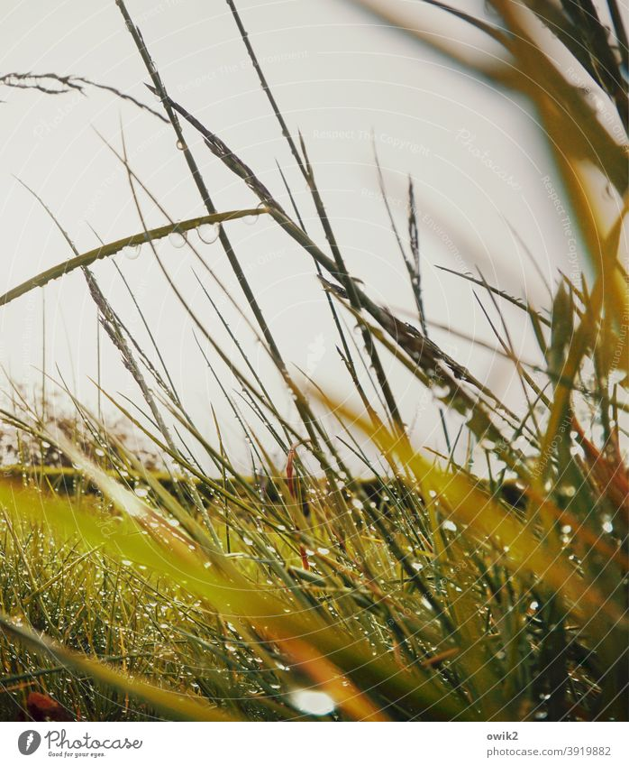 Lauter Halme Gras Nahaufnahme klein schemenhaft Außenaufnahme Detailaufnahme Schwache Tiefenschärfe durcheinander grün frisch Idylle draußen filigran Grashalme