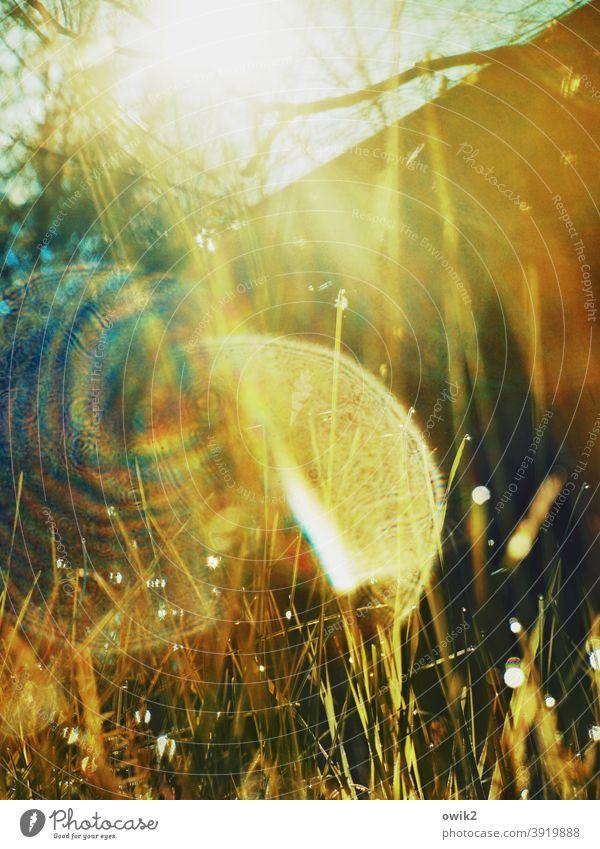 Lichtvoll glitzern Textfreiraum oben Schwache Tiefenschärfe Außenaufnahme grün Regen Halm Nahaufnahme klein Frühling verschwommen Landschaft Wassertropfen hell