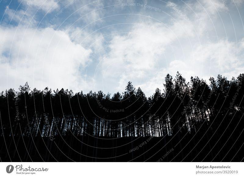 Silhouette eines Kiefernwaldes in den Bergen Abenteuer Hintergrund schön Schönheit blau Windstille Wolken Tag Entwaldung Erde Ökologie Ökosystem Umwelt