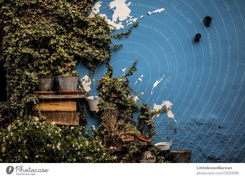 Hauswand mit Pflanzen Topfpflanze Wand fehlerhaft Mängel Farbfoto blau Außenaufnahme Tag Fassade Gebäude Bauwerk Architektur Grünpflanze Strukturen & Formen