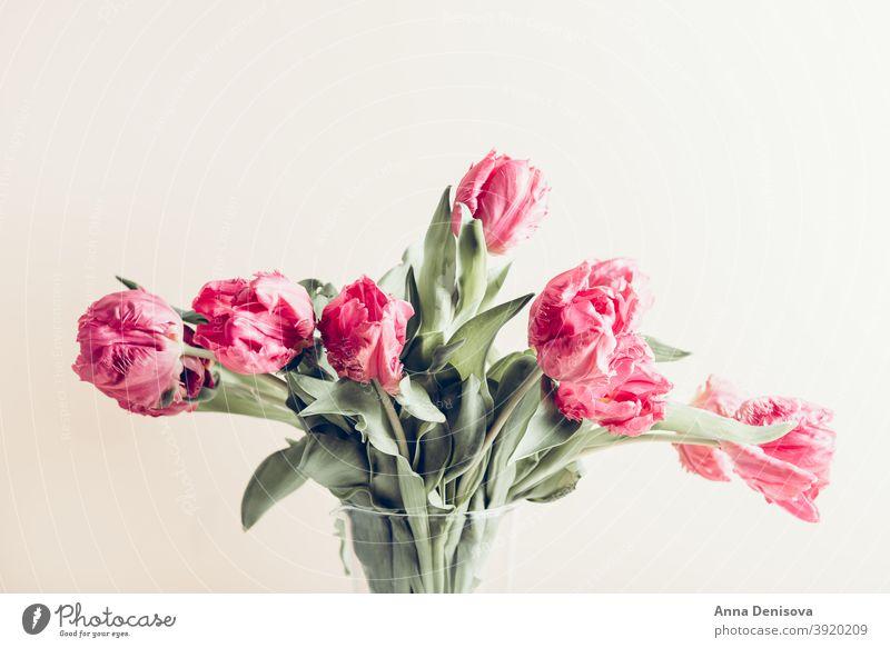 Strauß Pfingstrose Stil Tulpen Tag Haufen Blume Blumenstrauß purpur rosa Natur Frühling grün Muttertag 8. März schön Farbe Blüte Postkarte Sommer rot Geschenk
